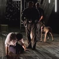 В омской драме собаки освоили актерскую профессию