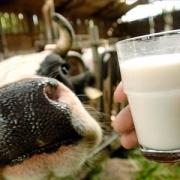 Молоко поднялось
