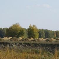 В Омской области на уборке зерновых задействовано более 3 500 комбайнов