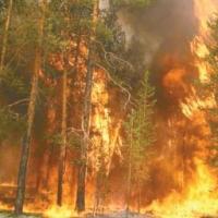 Майские шашлыки в Омской области переросли в 400 лесных пожаров