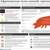 Омичи будут есть пермскую свинину