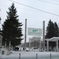 Три дерева вместо одного снесенного – новая схема озеленения в Омске