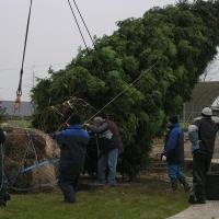 Омская мэрия приступила к высадке деревьев в сквере напротив Дома актера