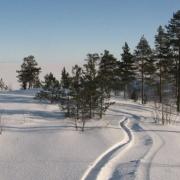 На охотников вышли по следам снегоходов
