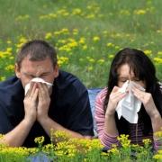 Цветенье трав в полях – не в радость. С аллергией можно справиться