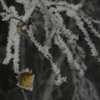 Синоптики обещают омичам крепкие морозы в последнюю неделю декабря
