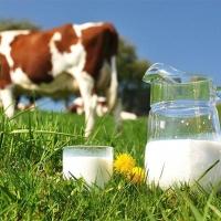 Омский министр заявил о готовности региона залить молоком всю Россию