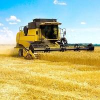 Успеть до дождей: уборка зерна в Омской области идет круглосуточно