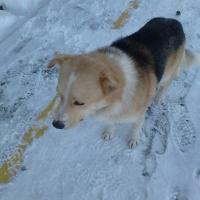 Новый руководитель омского «Спецавтохозяйства» облегчит жизнь собак