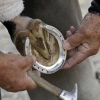 В Омской области могут возбудить дело после удара лошадиным копытом