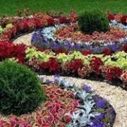 Омск украсится цветами