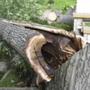Дерево перекроет пути