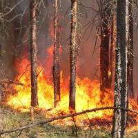 Югу Омской области грозят пожары на выходных