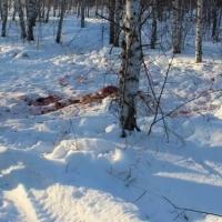 Браконьеру грозит до полугода тюрьмы за убийство двоих лосей под Омском