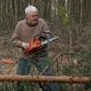 В Омской области сдано в аренду 380 тысяч гектаров леса