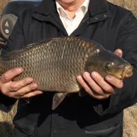 Омские рыбоводческие хозяйства выходят на промышленный уровень