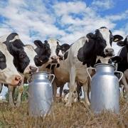 В Омской области будут производить на 2 тысячи тонн больше молока