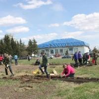 В омском регионе создают дендропарк «Сибирский лес»