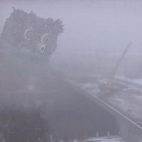 Омичи заметили ежика и сову в тумане