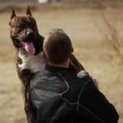 Омич натравил бойцовскую собаку на прохожего