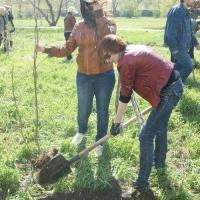 На Левобережье Омска за месяц высадят 1800 деревьев и кустарников