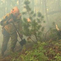 В лесах Омской области сохраняется высокая пожароопасность
