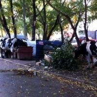 Омск оккупировали животные