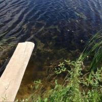 На озере в Ленинском округе Омска всплыло тело мужчины