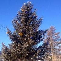 Улицы вокруг Главной елки в Омске перекроют на три дня