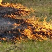 За день в Омской области произошло 10 лесных пожаров