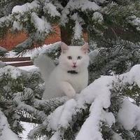 На выходных в Омске будет до -20 градусов