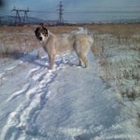В Омске неизвестные расстреляли собак