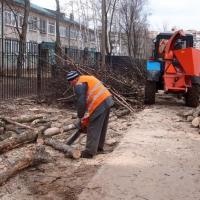 На территории омских школ вырубят 450 деревьев