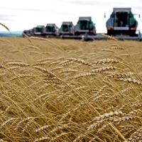 За 5 лет объем производства с/х продукции в Омской области вырос на 73%