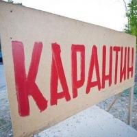 В Омской области зафиксировали случаи бешенства питомцев
