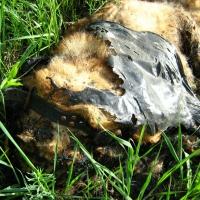 На территории омской лодочной станции обнаружили сожженную заживо собаку
