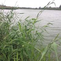 В Омской области в аренду сдали землю под озером Песчаное