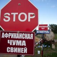 Главный ветеринар Омской области опроверг сокрытие чумы свиней