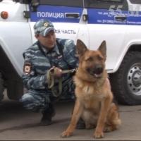 Благодаря служебной овчарке по кличке Тангай в Омском районе раскрыто разбойное нападение