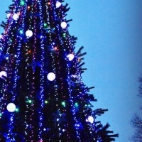 В Омской области молодой человек похитил гирлянду с главной елки в райцентре
