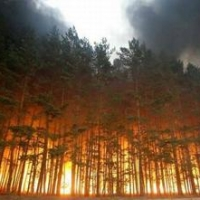 В лесах Омска и области установили 3 класс пожароопасности