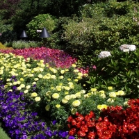 Для Омска закупят цветов на 2 млн рублей