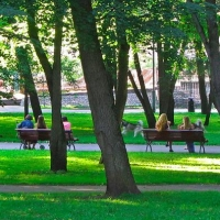 Преобразование омского леса в парк начнется с высадки деревьев