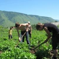 Омского фермера заставят вручную прополоть более 400 гектаров полей