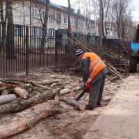 Бурков выделил 10 млн рублей на вырубку и кронирование деревьев в Омске