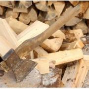 Директор лесхоза наломал дров