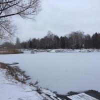 Омичи не обнаружили уток на замерзшем озере в парке