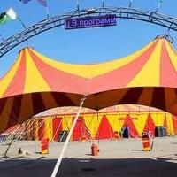 Приставы: нарушения в цирке Демидовых не устранены