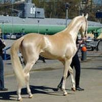 На омских скачках победила самая красивая лошадь России