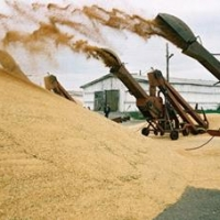 Аграрии Омской области намолотили более 3,4 млн тонн зерна